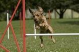 FOTOGALERIE ... agility